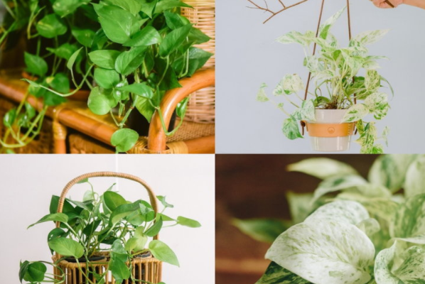 5 popular plants in the house